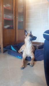 educateur comportementaliste canin seine maritime