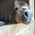 visites chevaux normandie