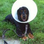 éducation canine vascoeuil