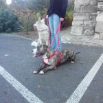 éducation canine chien 76