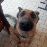 visites a domicile chiens normandie
