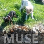 educateur canin comportementaliste rouen