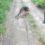 cours canin