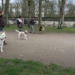 cours collectif chien compiegne
