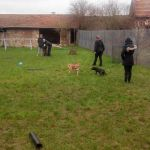 cours collectif chien oise