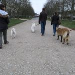 education canine compiegne