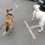 education canine gournay en bray
